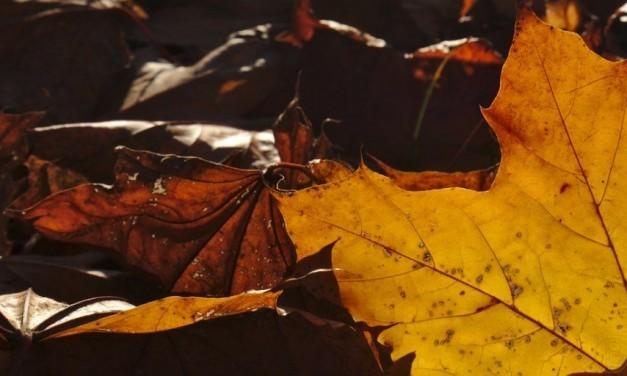 Herbstfeuer im Frühling