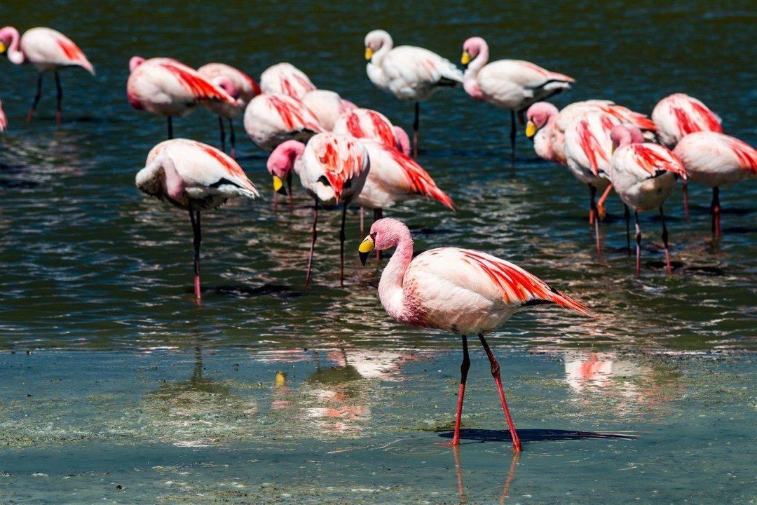 flamingos-2-1300-x-867